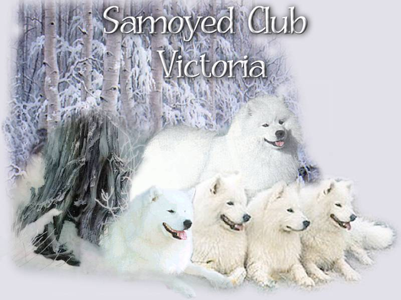 Samoyed Club of Victoria